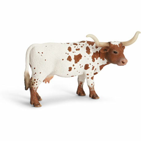 Texas Longhorn Cow