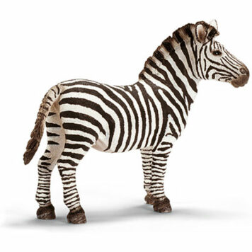 Zebra, Male